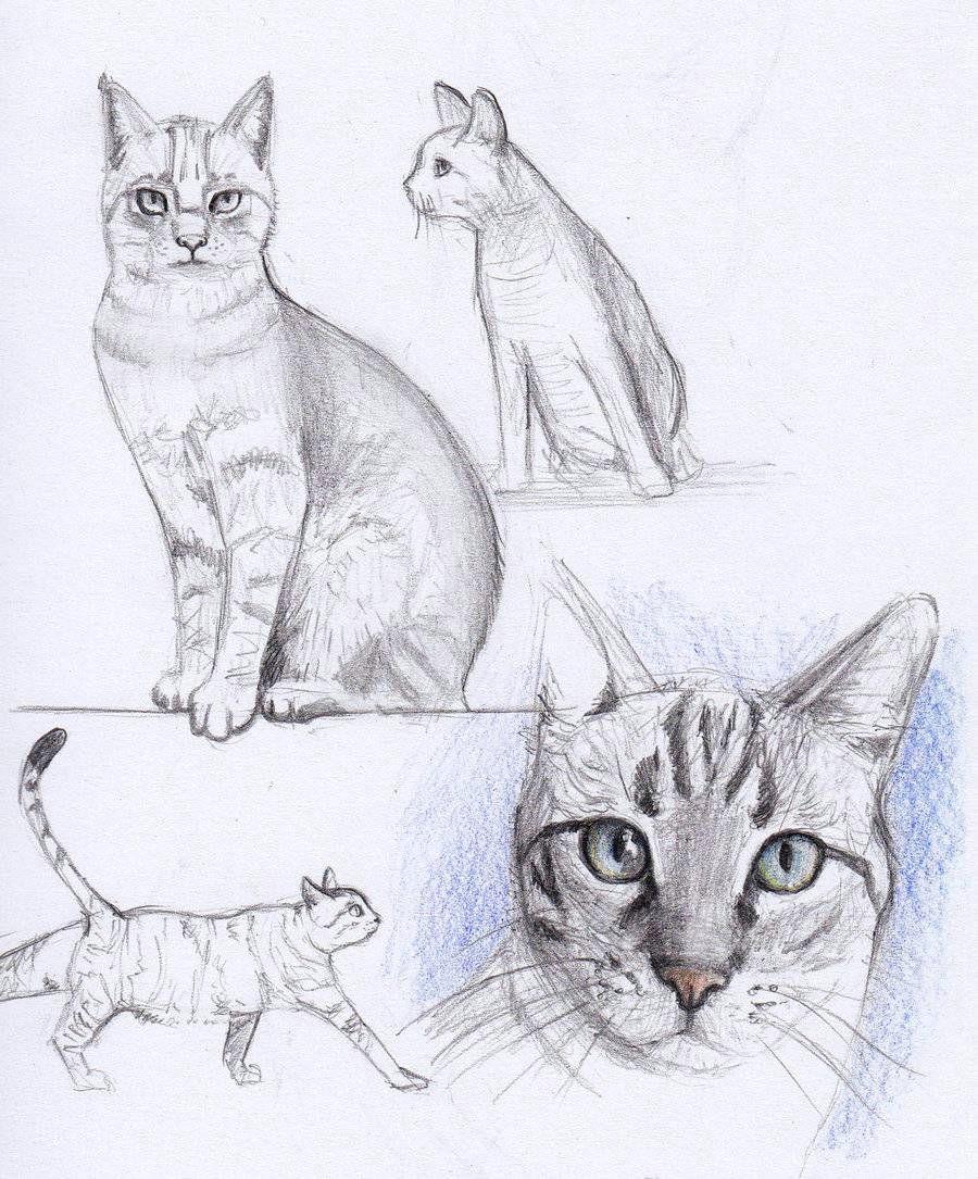 Drawing Ideas Cats Cat Drawing Acrylic Painting Ideas Pinterest Arte Ca Mo