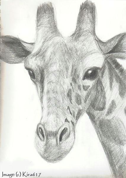 Drawing Ideas Giraffe 20 Ways to Draw A Giraffe Like A Cartoonist General Pinterest