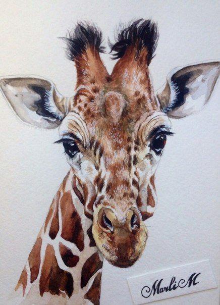 illustrator marlim watercolor giraffe giraffe drawing giraffe painting giraffe art watercolor illustration