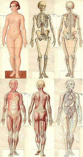 anatomical1937 jpg anatomie moda le femme 1937 from age flickr