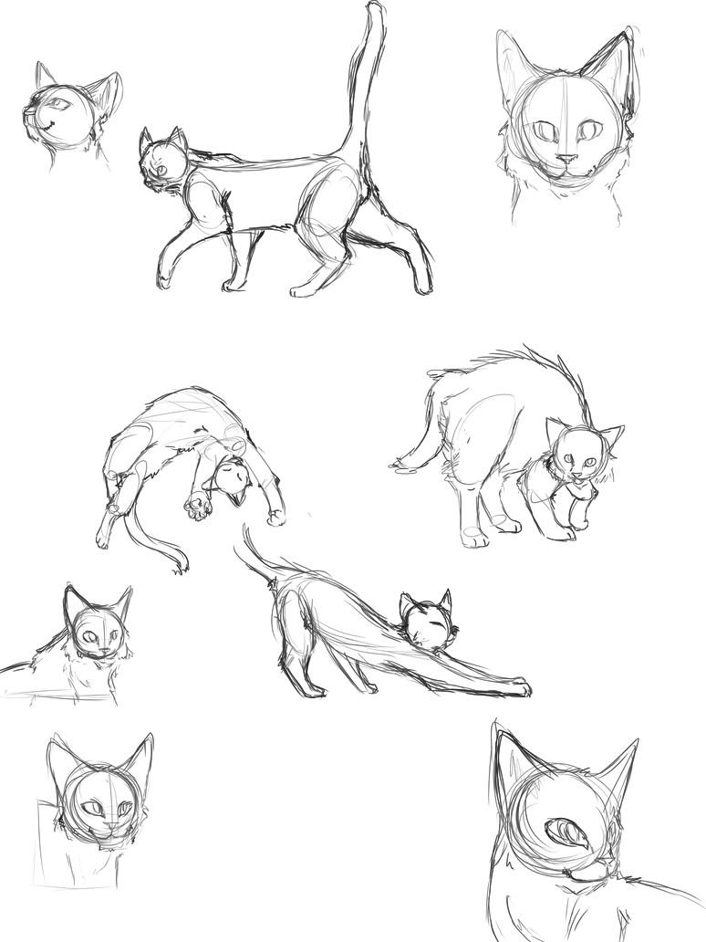 cat anatomy thingies seiishin draw tips cat reference drawing reference animal