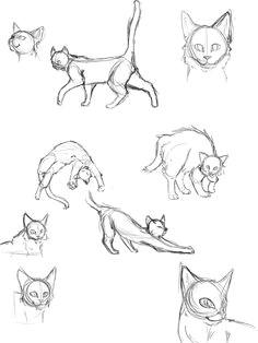 cat anatomy thingies seiishin