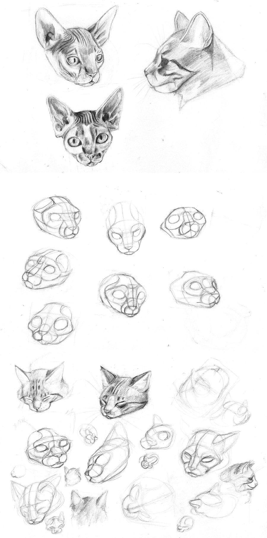 y sigo dibujando gatos hechos con referencias fotograficas done with photo references