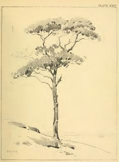 drawing foliage shrubs and trees how to draw foliage and trees with the following lessons