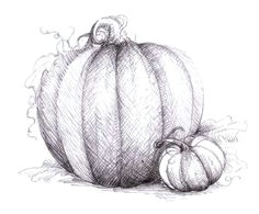 pumpkin drawings google search pumpkin drawing pumpkin art pumpkin vine fall drawings
