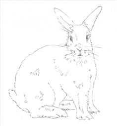 hop to it and draw a bunny rabbit by following easy steps