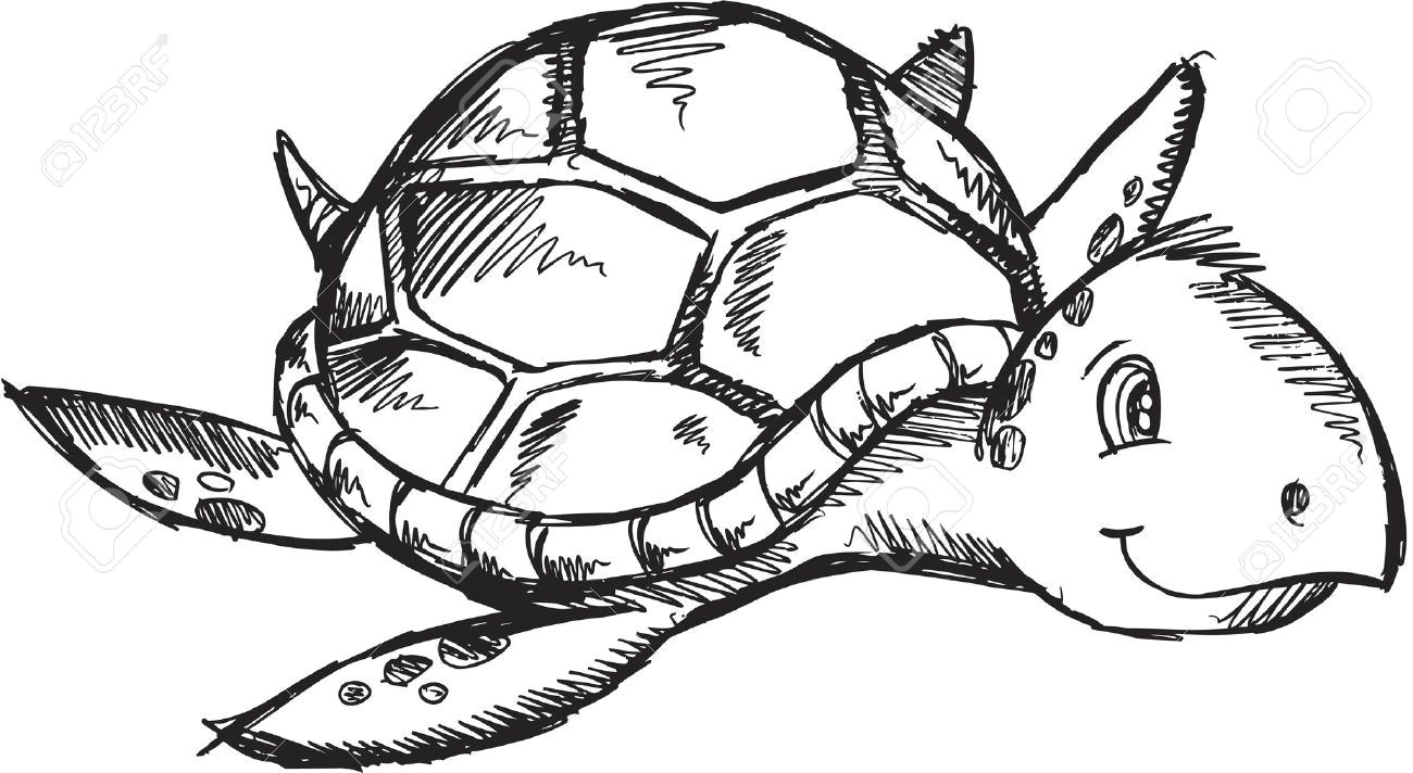 cute sketch doodle drawing sea turtle art illustration royalty