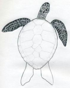 a turtle easy drawings how to draw tortoise graphite tropical
