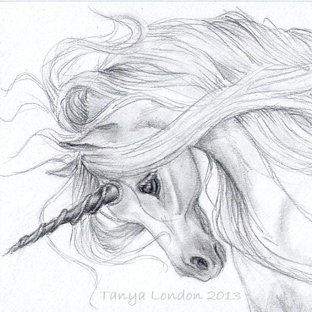 discover ideas about unicorn sketch