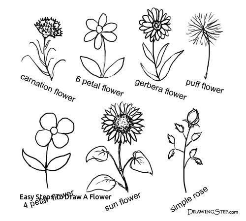 easy steps to draw a flower pin by alecia on doodles pinterest of easy steps to