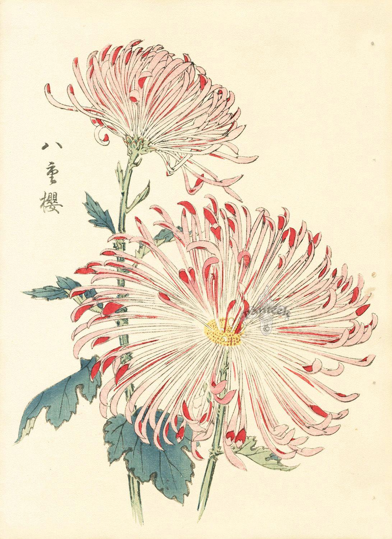 keika hasegawa chrysanthemum wood block prints hokusai japanese prints japanese art vintage japanese