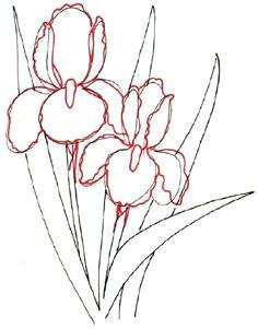 botanical drawings flower drawing tutorials flower art drawing iris drawing painting