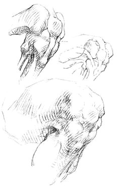 the knee human anatomy drawing anatomy study anatomy reference anatomy art body