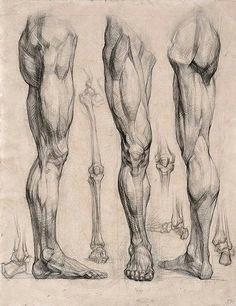 character design collection legs anatomy leg anatomy anatomy art anatomy for artists