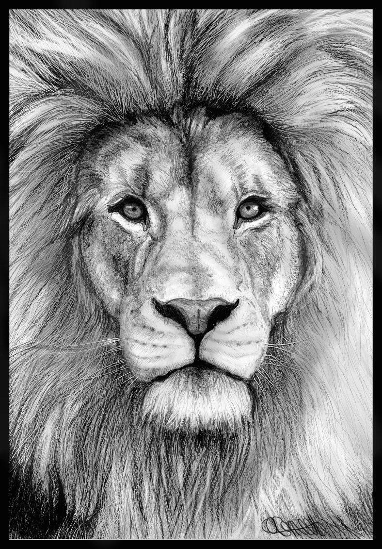 Drawing Lion Eyes Izu the Lion Tattos Drawings Pencil Drawings Art