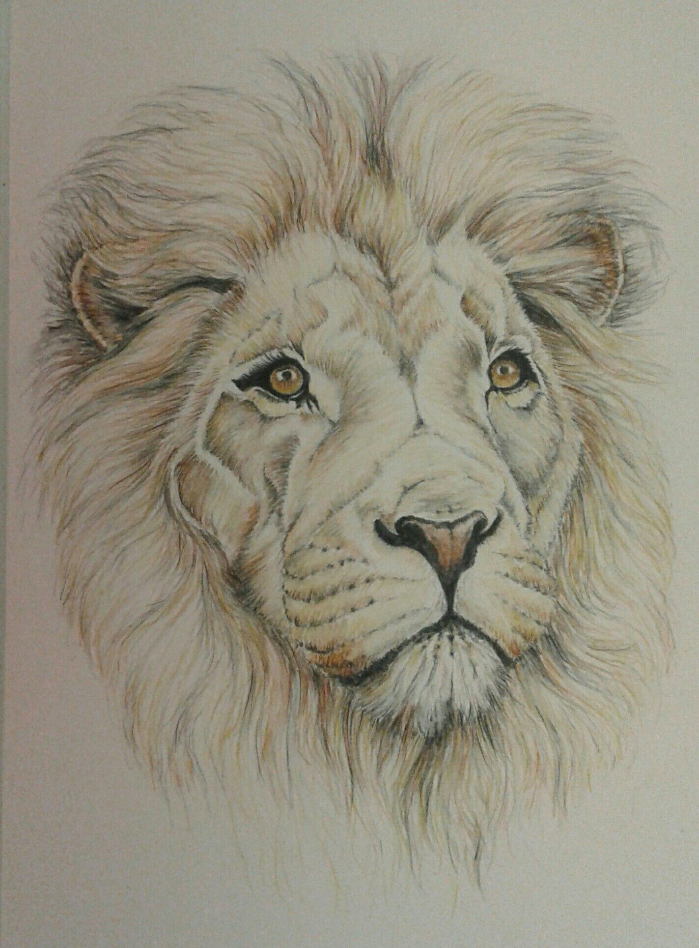 lion in watercolour pencil
