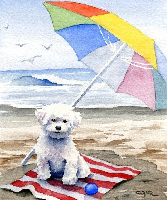 looks like my little dog bichon frise at the beach dog art print signed by by k9artgallery 12 50