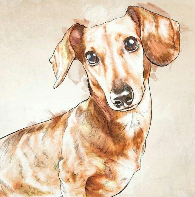 dachshund dachshund dachshund art daschund baby dogs pet dogs doggies