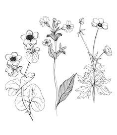 flower sketch fine line google search tattoo vorlagen blumen skizzen zeichnungen kunst