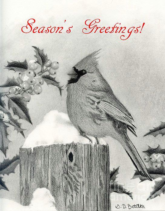 title season s greetings cardinal and holly artist sarah batalka medium drawing graphite pencil and text