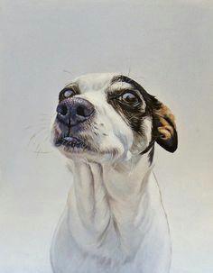 james ruby maggie watercolor animals dog drawings animal drawings animal illustrations
