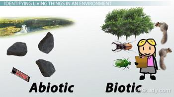 biotic and abiotic elements