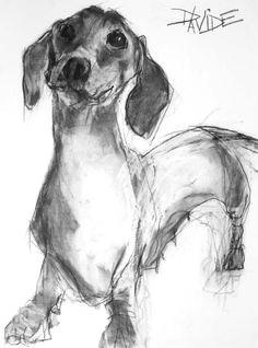 heather hutchinson a dachshund drawing