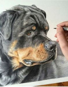 danielle fisher on instagram rocco the rottweiler is still one of my favourite portraits i love it when i get the chance to create an interesting