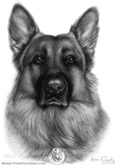 german shepherd graphite portrait drawing more