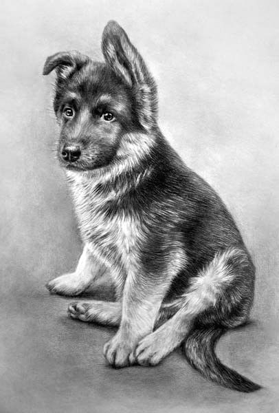 Drawing Of A Baby Dog Baby Thor Simply Silentartists Art In 2019 Drawings Pencil