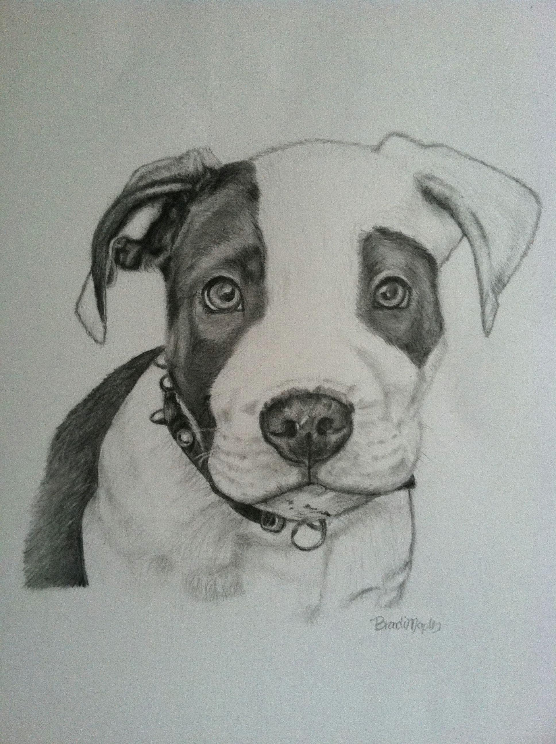 pit bull puppy graphite pencil