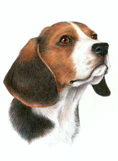 beagle dog art portrait