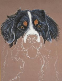 blog du peintre animalier cindy barillet portraits d animaux portrait de bouvier bernois