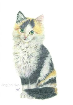 cat art print study of a sweet furry calico kitten portrait cat drawing