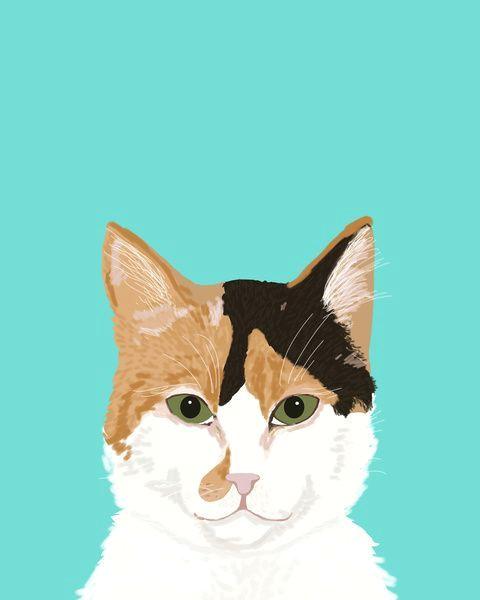 calico cat cute cat black white tan orange tabby cat cute