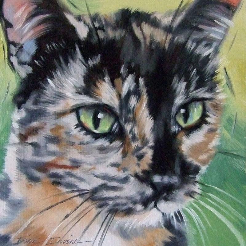 calico cats cat paintings pet art art illustrations crazy cats cat