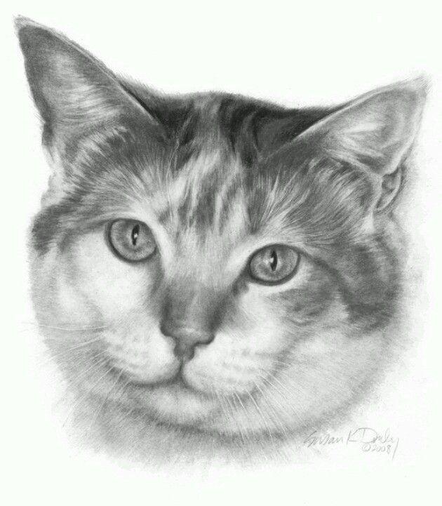 calico pencil portrait drawing the originals cats prints artist