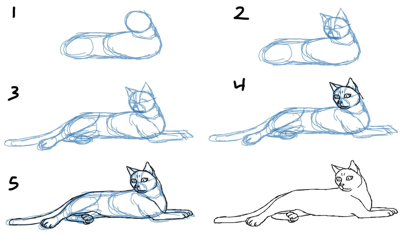 how to draw cat bodies in poses savanna williams