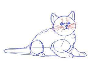 dod do n d n d d d n n dod n don dod n d d d d n d d cat steps cat paw print cat paws animal drawings