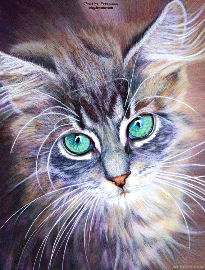 cat drawings if you are a cat person i am sure you are aware of the different expressions it gives to please its owners