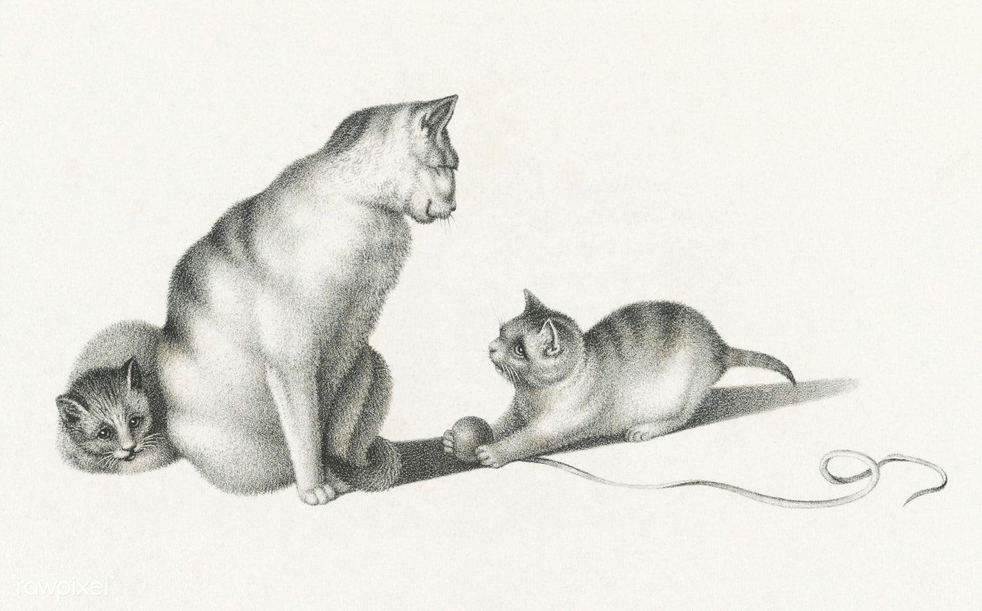 Drawing Of A Cat Playing Illustration Of Two Domestic Cats Playing by Gottfried Mind 1768