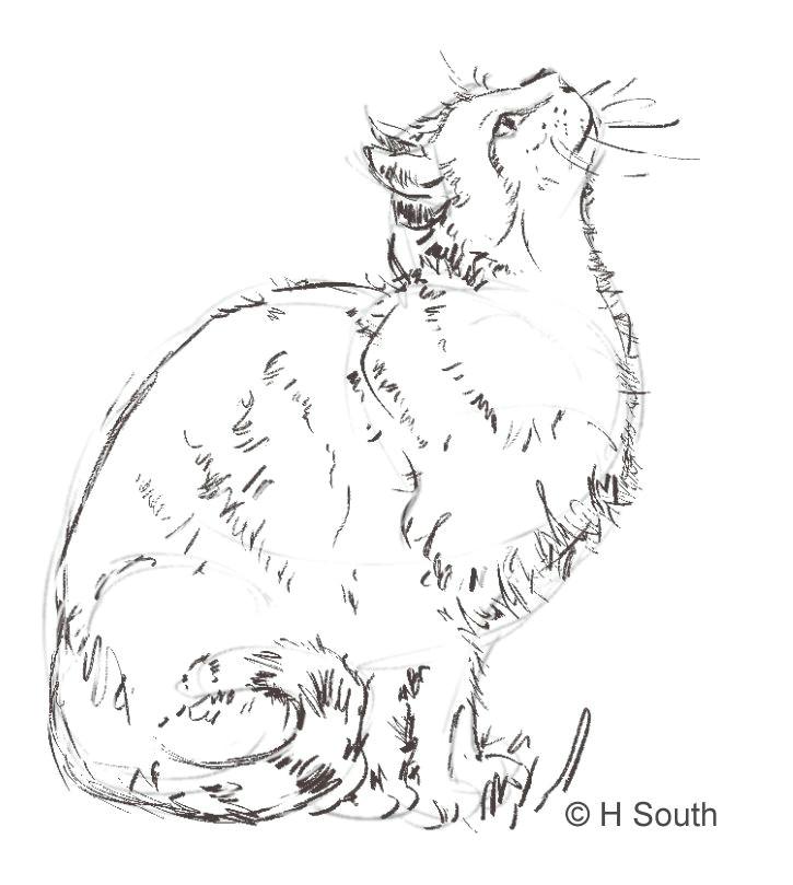 cat sketch2 56a26dbc5f9b58b7d0ca30ff jpg