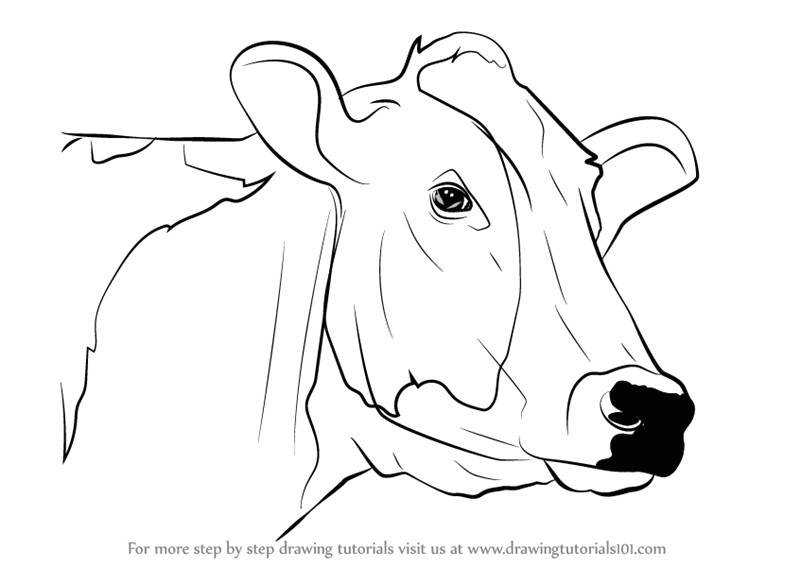 Drawing Of A Cattle Drawing A Cow Step by Step Art Animals Cow Drawing Drawings