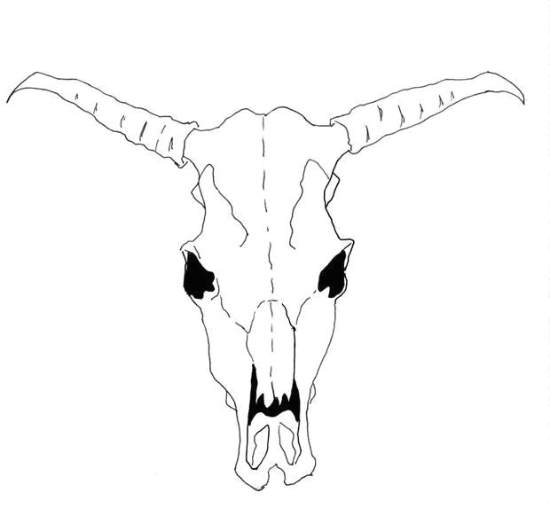 how to draw a cow skull for georgia o keeffe