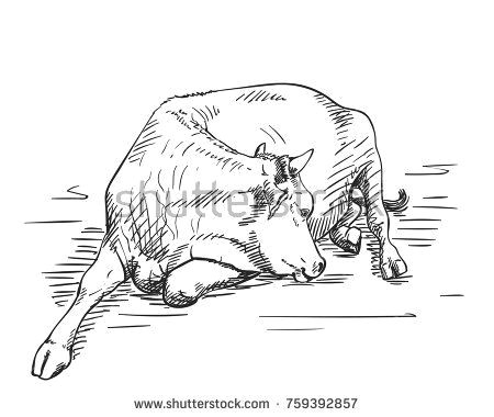 sketch of lying cow hand drawn vector illustration