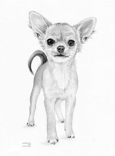 chihuahua puppy dog limited edition art by arcadiaportraits chihuahua drawing chihuahua puppies dogs and