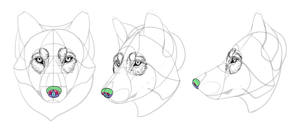 how to draw wolves drawing head 21