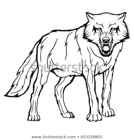 vector sketch of a wild dog business sign logo husky face sketch of a