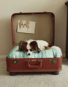 cute dog bed idea cute dog beds diy dog bed pet beds