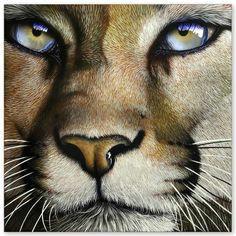lion tigre wildlife art animal drawings animal paintings pencil drawings animal